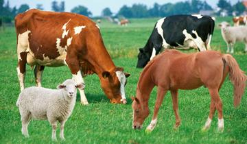 Ethicare Laboratories | Ethicare Animal Health